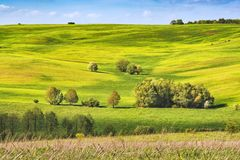 Spring fields covered with fresh grass. Ukraine, Europe Royalty Free Stock Photos