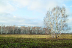 Spring in the fields of Eastern Europe. Spring in fields of Eastern Europe Royalty Free Stock Images