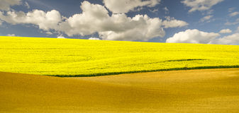 Spring fields in Germany Royalty Free Stock Photography