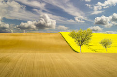 Spring fields in Germany Royalty Free Stock Photos