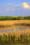 Spring fields lake blue sky stock photography