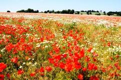 Spring fields, Lichfield. Royalty Free Stock Photo