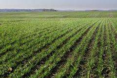Spring fields rural scene Stock Images