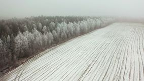 Spring fields in snow. Aerial view. Early spring stock footage