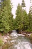 Spring filled mountain stream. Stock Photo