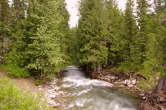 Spring filled mountain stream. Stock Image