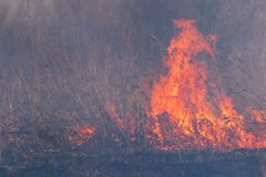 In the smoke and fire burning forest massif. stock images