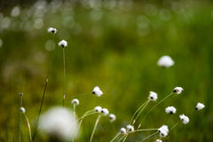 Spring first fresh green grass in the sunshine with a drop of de Royalty Free Stock Photography