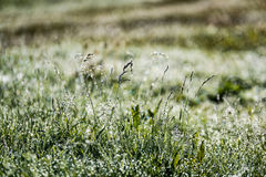Spring first fresh green grass in the sunshine with a drop of de Royalty Free Stock Photos