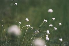 Spring first fresh green grass in the sunshine with a drop of de. W. Abstract natural background - vintage film look Royalty Free Stock Image