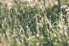 Spring first fresh green grass in the sunshine with a drop of de. W. Abstract natural background - vintage film look Stock Photography
