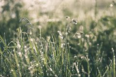 Spring first fresh green grass in the sunshine with a drop of de. W. Abstract natural background - vintage film look Stock Photos