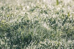 Spring first fresh green grass in the sunshine with a drop of de. W. Abstract natural background - vintage film look Royalty Free Stock Photo