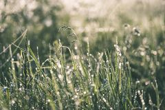 Spring first fresh green grass in the sunshine with a drop of de. W. Abstract natural background - vintage film look Stock Images