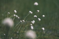 Spring first fresh green grass in the sunshine with a drop of de. W. Abstract natural background - vintage film look Royalty Free Stock Photos