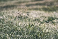 Spring first fresh green grass in the sunshine with a drop of de. W. Abstract natural background - vintage film look Royalty Free Stock Photography