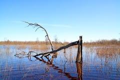 Spring flood stock image