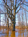 Spring flood Stock Photos