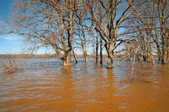 Spring flood Royalty Free Stock Photos