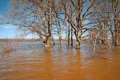 Spring flood Royalty Free Stock Photos