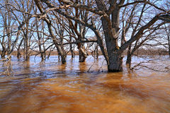 Spring flood Royalty Free Stock Photography