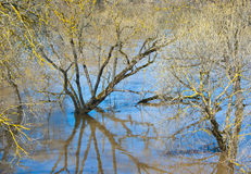 Spring flood Stock Images