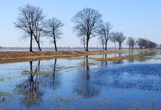 Spring flood. Flood on a meadow with early spring royalty free stock photo