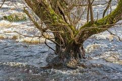 Spring flood Stock Photo