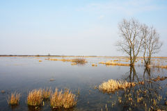 Spring and flood on meadow Royalty Free Stock Image