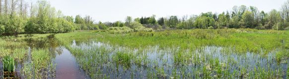 Spring flood meadows. Spring meadows covered with meltwater and stream water stock image