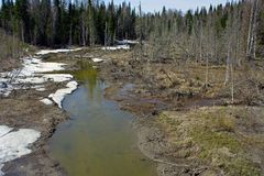 The spring flood in the Siberian taiga Royalty Free Stock Photography