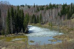 The spring flood in the Siberian taiga Stock Images