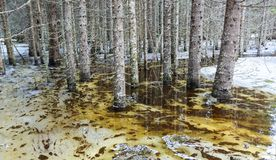 Spring flood. In the wild forest, with the trees standing and reflecting in the water. Melting snow and ice on the swamp. Spring in Norway Stock Photos