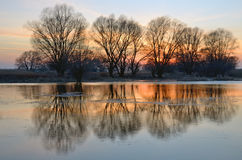 Spring flood on sunset with reflection of trees in river Royalty Free Stock Photo
