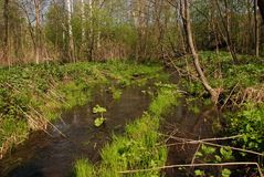 Flood time at the sunny day in the forest outside of the city stock photos