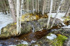 Spring flood. In the wild forest, with the trees standing and reflecting in the water. Melting snow and ice on the swamp. Spring in Norway Royalty Free Stock Photo
