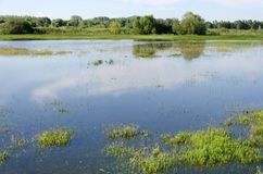 Spring flooding. Flood basin of the Tisza River in Tiszalok, Hungary. Hungarian countryside. Overflow of water from the river. Blue sky royalty free stock photos