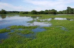 Spring flooding. Flood basin of the Tisza River in Tiszalok, Hungary. Hungarian countryside. Overflow of water from the river. Blue sky royalty free stock photo