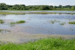 Spring flooding. Flood basin of the Tisza River in Tiszalok, Hungary. Hungarian countryside. Overflow of water from the river. Blue sky royalty free stock images