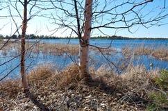Spring flooding on the lake Stock Photos