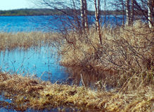 Spring flooding on the lake Royalty Free Stock Photo