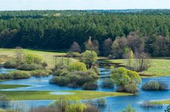 Spring flooding on the river against the background of the coniferous forest and blue sky.  royalty free stock image