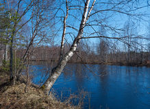 Spring flooding on the river. Russian landscape.Spring flooding on the river  Arkhangelsk region Royalty Free Stock Images