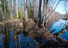 Spring flooding on the river. Russian landscape.Spring flooding on the river  Arkhangelsk region Royalty Free Stock Photo