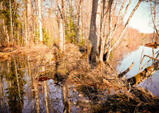 Spring flooding on the river. Russian landscape.Spring flooding on the river  Arkhangelsk region Stock Photo