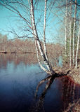 Spring flooding on the river. Russian landscape.Spring flooding on the river  Arkhangelsk region Stock Images