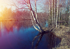 .Spring flooding on the river. Russian landscape.Spring flooding on the river  Arkhangelsk region Royalty Free Stock Images