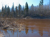 Spring flooding on the river. Russian landscape .Spring flooding on the river Solsa Arkhangelsk region Stock Photography