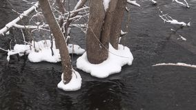 Spring flooding of the river, tree flooded with melt water, snow and ice on trees. stock video footage