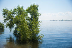 Spring flooding on the river. Waterlogged trees Stock Images